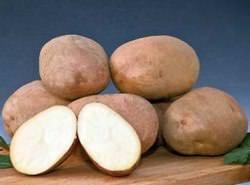 Картофель «Сынок» относится к категории среднепоздних сортов