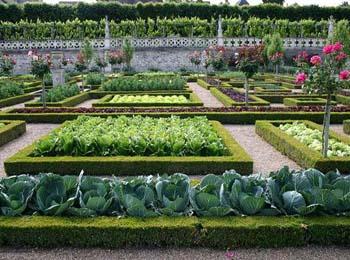 Декоративная грядка – оптимальный выбор для тех, кто ценит порядок на своем садовом участке и готов ухаживать за посаженными культурами
