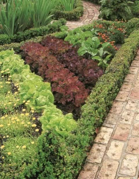 Выбор растений зависит от вкуса и предпочтений хозяина