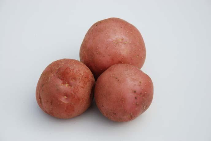 Картофель «Леди Розетта» выведен ведущими голландскими специалистами в области селекции овощных культур