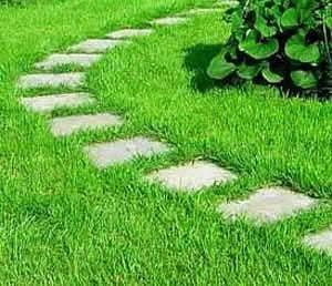 Выбираем красивый газон для дачи, исключая стандартные и общепринятые варианты