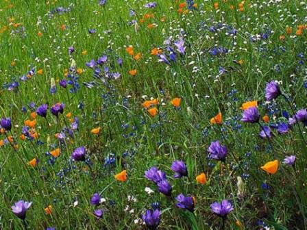 Луговой газон не просто красив и оригинален, но также ежедневно дарит свежий и приятный аромат