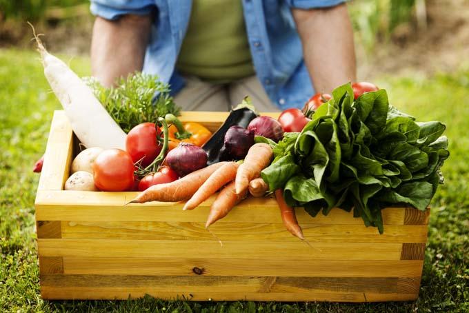 В июне рекомендует начать активную работу по посеву и посадке различных огородных культур