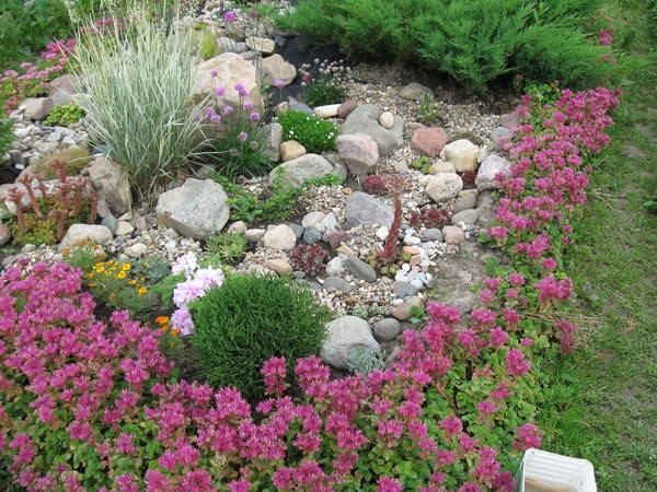 Любое растение с нежными цветками и ажурной листвой станет для армерии прекрасным спутником