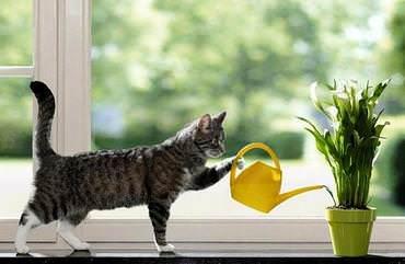 Горшки для цветов призваны дополнить интерьер квартиры