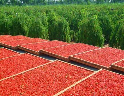 Легенды о ягоде