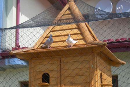 Как построить красивый и удобный дом для голубей на даче?