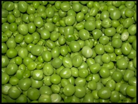 Выращивайте горох на даче для употребления в свежем виде, для разнообразных блюд и консервирования