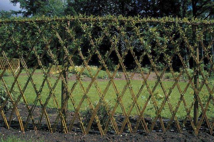 Немного фантазии, и у вас на даче невероятной красоты живой забор!
