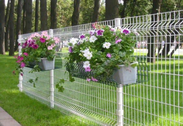 Живой забор на основе простого ограждения из сварной сетки