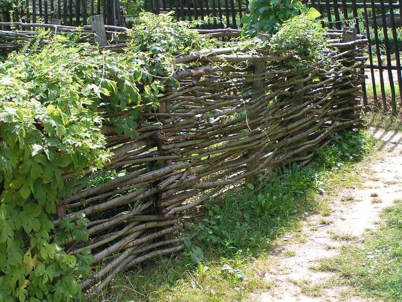 Плетеный забор и дачные растения — оригинальная и очень интересная композиция