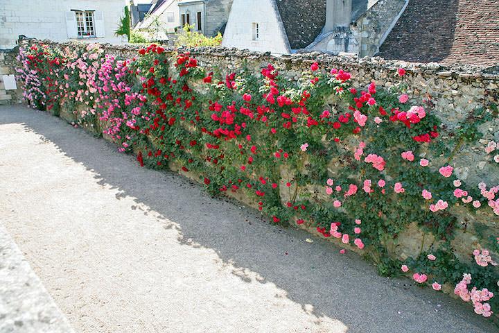 Каменный забор и розы — оригинально и очень нестандартно!