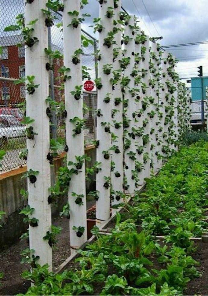 Представьте себе, что на обыкновенном внутридачном ограждении вы выращиваете различные растения