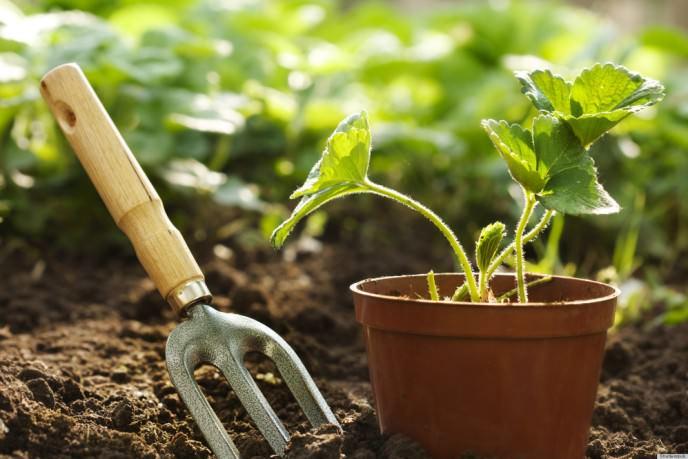 Посадка осенью не представляет собой новое веяние, и агротехника ее выполнения отработана годами