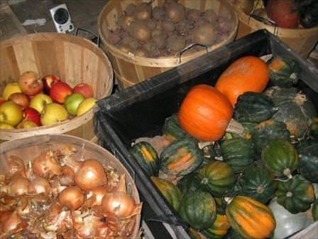 Выбираем лучшее место для хранения овощей и фруктов на даче