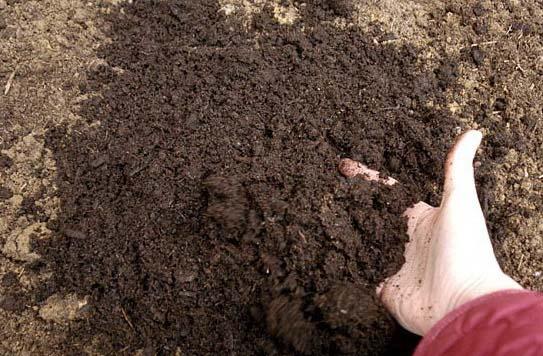 Обеззараживание почвы в тепличных сооружениях является очень важным этапом всех предпосадочных подготовительных мероприятий