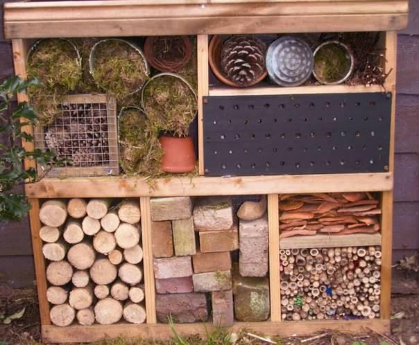 Полезных насекомых можно привлечь в сад несколькими способами