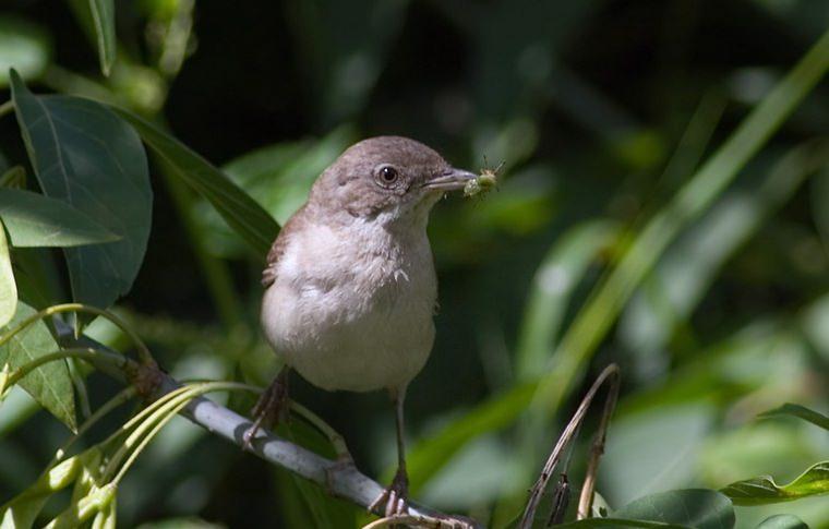 Польза птиц в саду несомненна