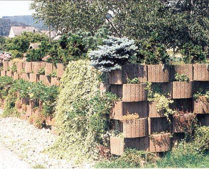 Живой забор – декоративная изгородь