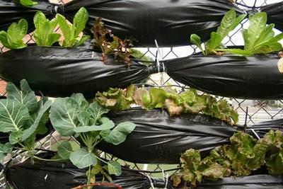 Создаем живой забор из обычной сетки, полиэтилена и зелени для выращивания!