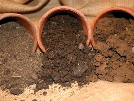 Климат, природа, качество грунта — практически самые важные факторы при покупке дачного участка