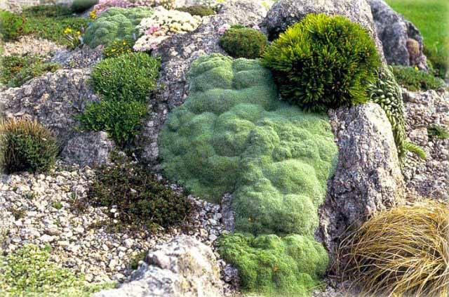 Известняк отлично впитывает влагу, в засушливые периоды он отдает ее корням растений