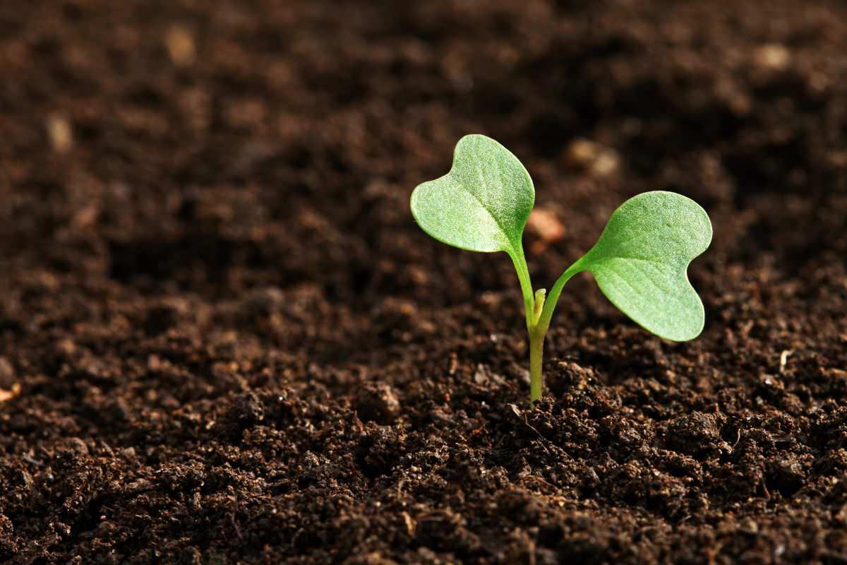 Каждое растение нуждается в полезных элементах, чтобы правильно формироваться и набираться сил еще на ранних стадиях жизни