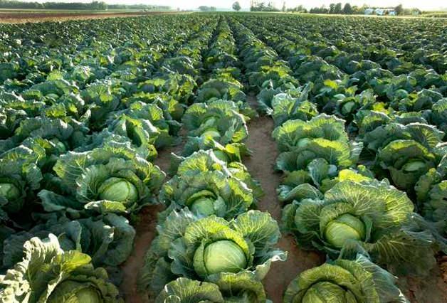 Правильно выращенная рассада – залог высокого урожая