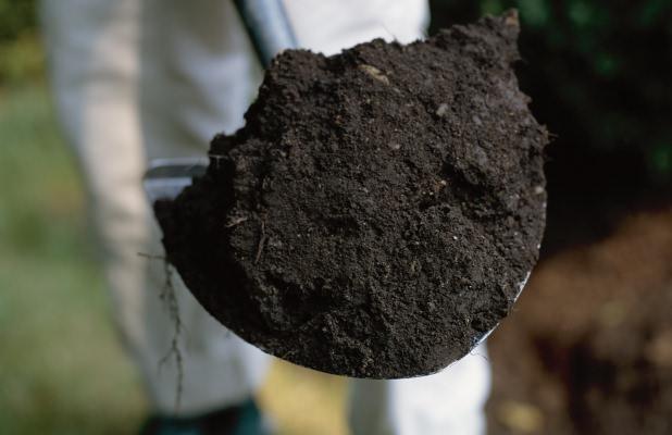 Почва для выращивания рассады капусты имеет массу требований