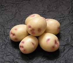 Картофель «Синеглазка» является очень популярным сортом