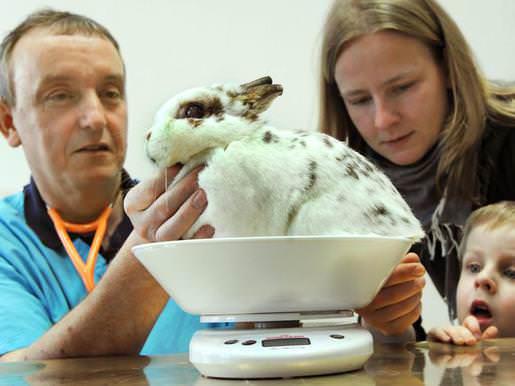При заболевании кроликов в срочном порядке вызывается ветеринарный врач