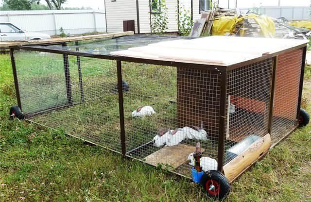 Кролики в домашних условиях могут быть выращены в вольерах