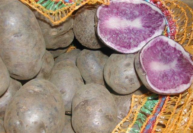Картофель сорта «Гурман» относится к диетическим продуктам