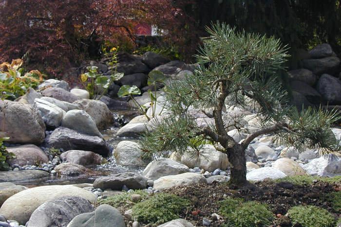 Особенностью китайского сада можно назвать характерную для него иерархичность, отношения подчиненности между отдельными элементами, при обязательном соблюдении баланса и гармонии в духе фэн-шуй