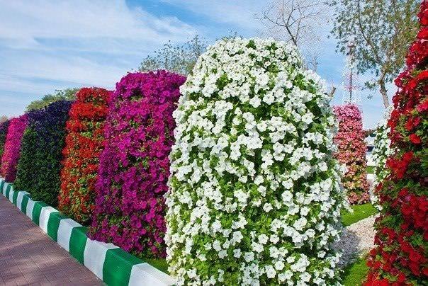 Вертикальные клумбы из строительной сетки позволяют создавать неповторимые цветочные композиции