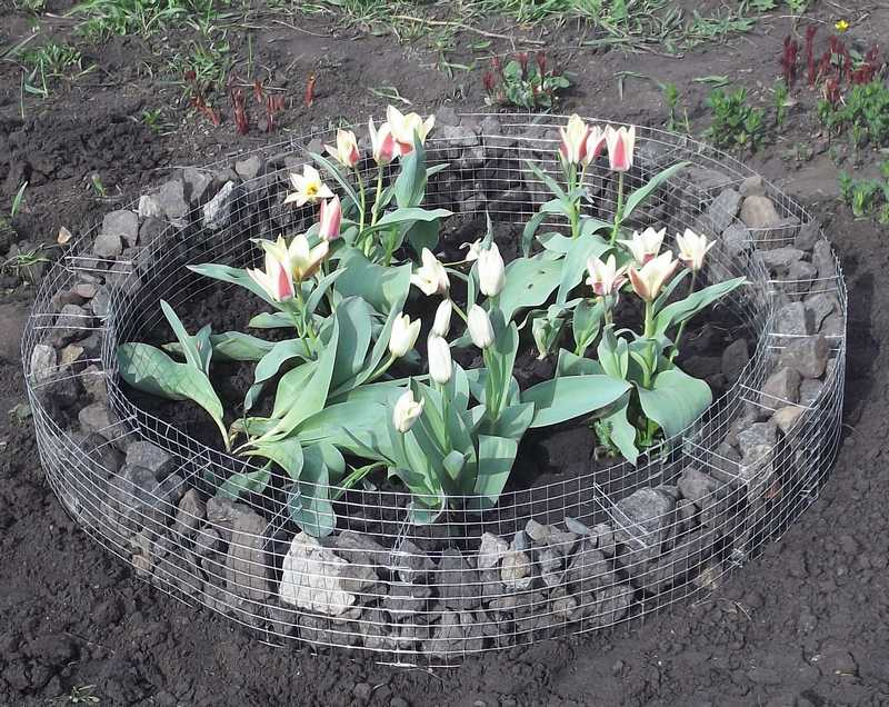 Одноуровневая клумба представляет собой каркас, в котором растения располагаются на одном уровне