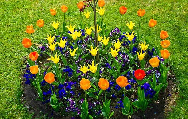 В первую очередь при организации простой клумбы следует обратить внимание на то, что все декоративные растения имеют разнообразные формы жизни