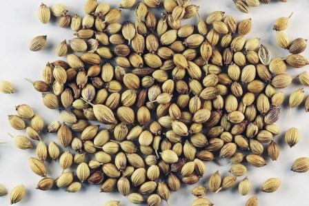 Кориандр богат витаминами и полезными для человека элементами