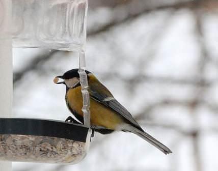 Кормушка для птиц из обыкновенной пластиковой бутылки