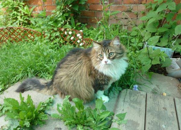 Как защитить растения от кошек на даче