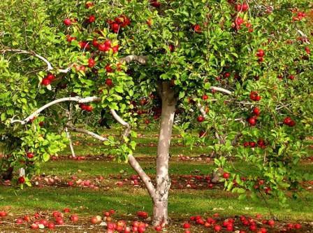 Сад – это не только территория сбора урожая яблок, слив и персиков, но и определенный участок для работы