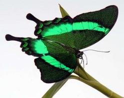 Бабочки дарят необычные и прекрасные чувства