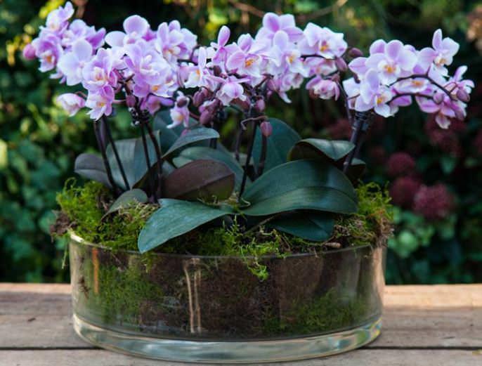 Маленькая орхидея способна стать большим украшением практически любого интерьера
