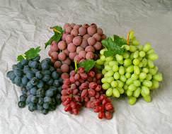 Лучшие молдавские сорта винограда