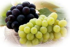 Виноград «Мускат» был известен еще древним грекам и римлянам