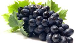 Виноград «Надежда АЗОС» относится к столовым сортам