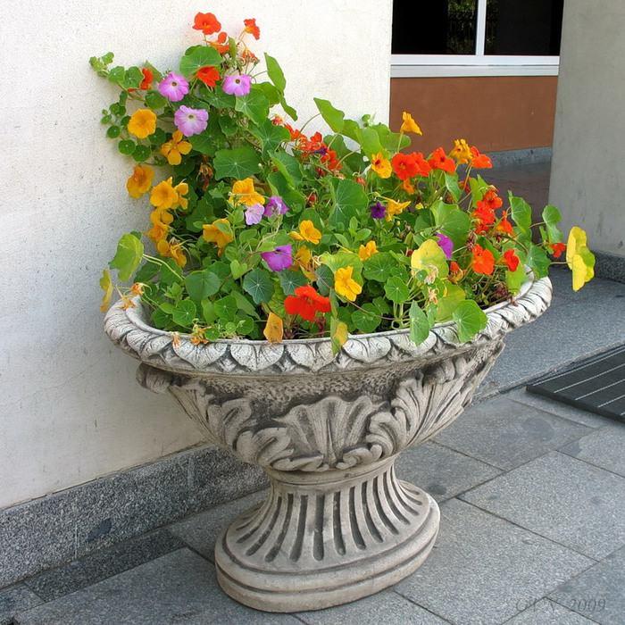 Выращивание настурции на даче – хороший способ изменить ландшафт и порадоваться красоте растения