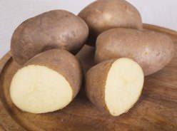Картофель «Инноватор» – среднеранний сорт столового назначения