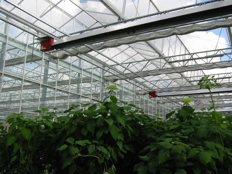 В осенний период нельзя допускать падения температуры менее -1°С, весной следует стабильно поддерживать температуру воздуха и грунта для качественного прорастания и развития рассады