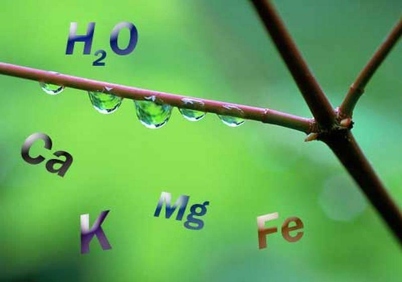 В процессе очистки водоема следует уделить внимание поверке жесткости и мягкости воды